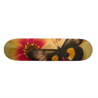 Sammamish Washington Photograph of Butterfly 39 Skateboard