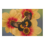 Sammamish Washington Photograph of Butterfly 39 Wood Canvases