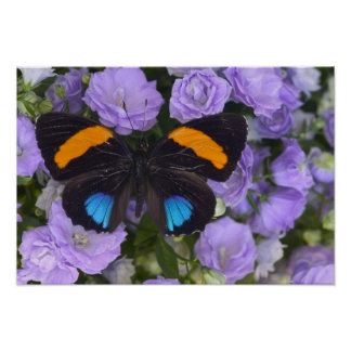 Sammamish Washington Photograph of Butterfly 3 Poster