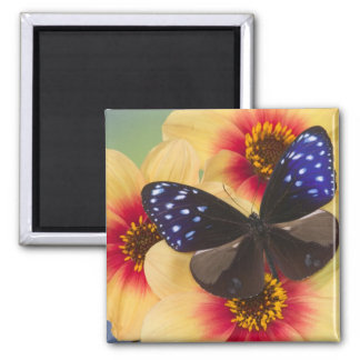 Sammamish Washington Photograph of Butterfly 40 Magnet