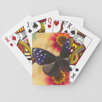 Sammamish Washington Photograph of Butterfly 40 Playing Cards