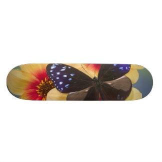 Sammamish Washington Photograph of Butterfly 40 Skateboard Deck