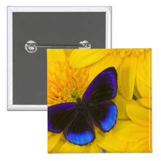 Sammamish Washington Photograph of Butterfly 41 2 Inch Square Button
