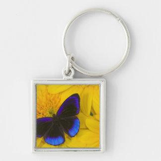 Sammamish Washington Photograph of Butterfly 41 Keychain