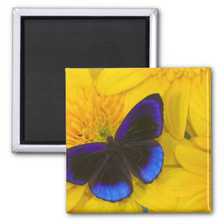 Sammamish Washington Photograph of Butterfly 41 Magnet