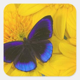 Sammamish Washington Photograph of Butterfly 41 Square Sticker