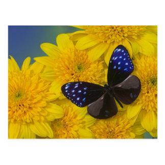 Sammamish Washington Photograph of Butterfly 42 Postcard