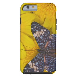 Sammamish Washington Photograph of Butterfly 43 Tough iPhone 6 Case
