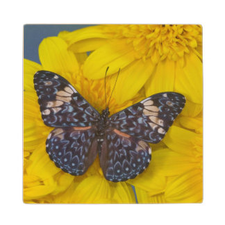 Sammamish Washington Photograph of Butterfly 43 Wood Coaster