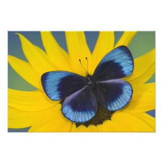 Sammamish Washington Photograph of Butterfly 43