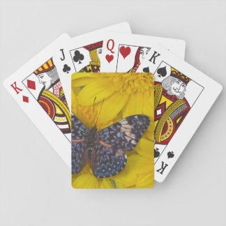 Sammamish Washington Photograph of Butterfly 43 Playing Cards