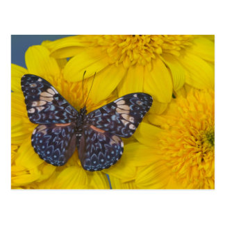Sammamish Washington Photograph of Butterfly 43 Postcard