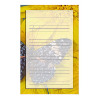 Sammamish Washington Photograph of Butterfly 43 Stationery