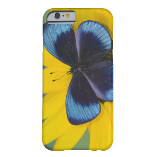 Sammamish Washington Photograph of Butterfly 44 Barely There iPhone 6 Case