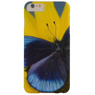 Sammamish Washington Photograph of Butterfly 44 Barely There iPhone 6 Plus Case