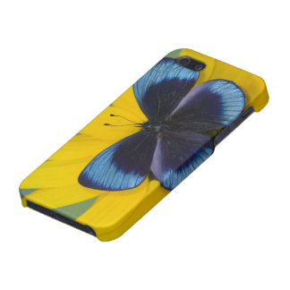 Sammamish Washington Photograph of Butterfly 44 Cover For iPhone SE/5/5s