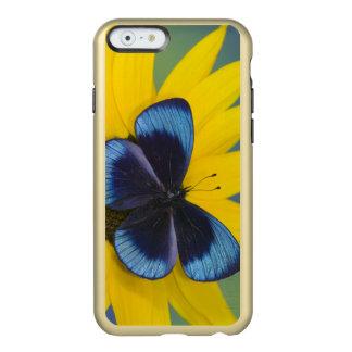 Sammamish Washington Photograph of Butterfly 44 Incipio Feather Shine iPhone 6 Case