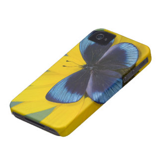Sammamish Washington Photograph of Butterfly 44 iPhone 4 Cover