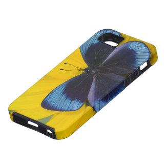 Sammamish Washington Photograph of Butterfly 44 iPhone SE/5/5s Case