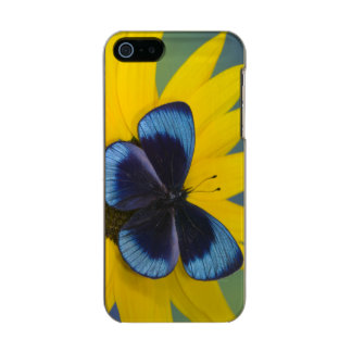 Sammamish Washington Photograph of Butterfly 44 Metallic Phone Case For iPhone SE/5/5s
