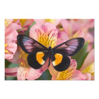 Sammamish Washington Photograph of Butterfly 44