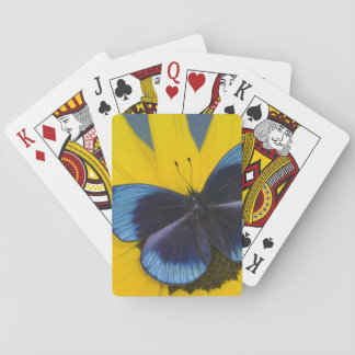 Sammamish Washington Photograph of Butterfly 44 Playing Cards