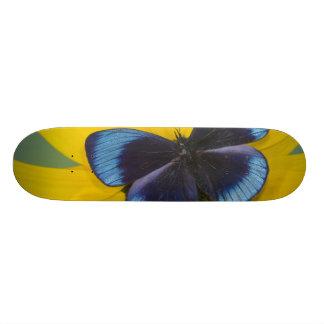 Sammamish Washington Photograph of Butterfly 44 Skateboard