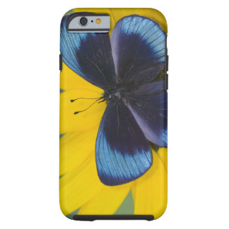Sammamish Washington Photograph of Butterfly 44 Tough iPhone 6 Case