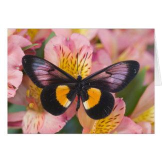 Sammamish Washington Photograph of Butterfly 45 Card
