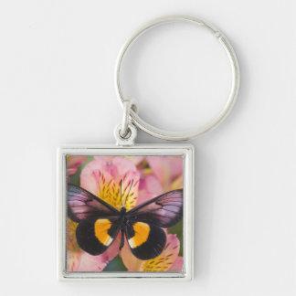 Sammamish Washington Photograph of Butterfly 45 Keychain