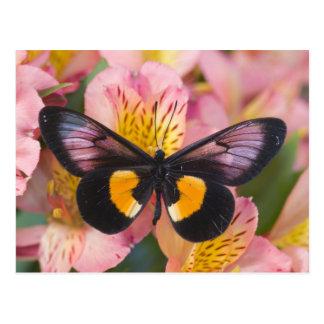 Sammamish Washington Photograph of Butterfly 45 Post Card