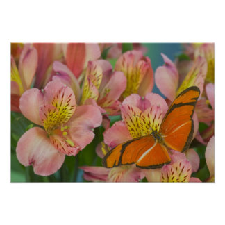 Sammamish Washington Photograph of Butterfly 45 Poster
