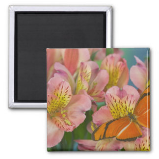 Sammamish Washington Photograph of Butterfly 46 Magnet