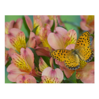 Sammamish Washington Photograph of Butterfly 48 Postcard