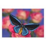 Sammamish Washington Photograph of Butterfly 49