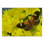 Sammamish Washington Photograph of Butterfly 49 Greeting Card