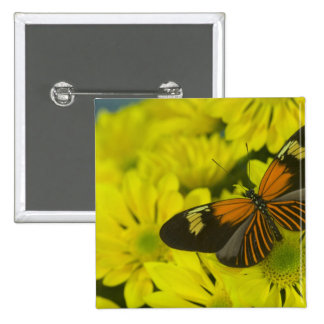Sammamish Washington Photograph of Butterfly 49 Pinback Button