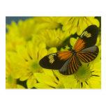 Sammamish Washington Photograph of Butterfly 49 Postcard