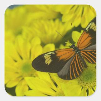 Sammamish Washington Photograph of Butterfly 49 Square Sticker