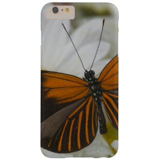 Sammamish Washington Photograph of Butterfly 50 Barely There iPhone 6 Plus Case