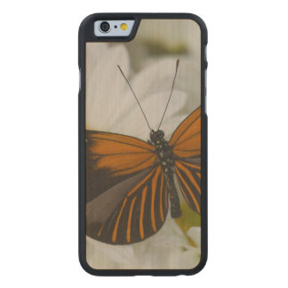 Sammamish Washington Photograph of Butterfly 50 Carved Maple iPhone 6 Slim Case