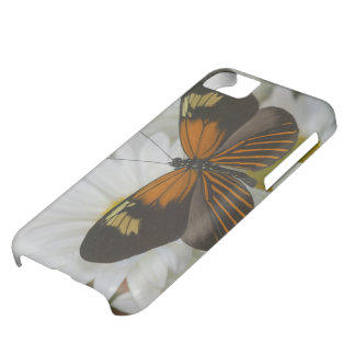 Sammamish Washington Photograph of Butterfly 50 Case For iPhone 5C