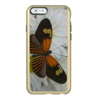 Sammamish Washington Photograph of Butterfly 50 Incipio Feather Shine iPhone 6 Case