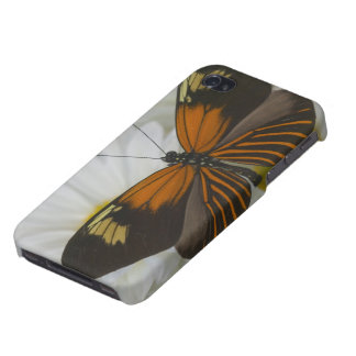 Sammamish Washington Photograph of Butterfly 50 iPhone 4/4S Cover