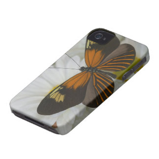 Sammamish Washington Photograph of Butterfly 50 iPhone 4 Case-Mate Case