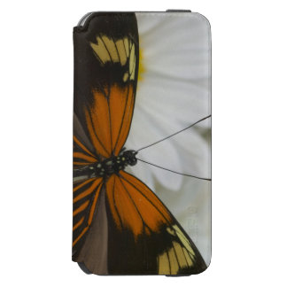 Sammamish Washington Photograph of Butterfly 50 iPhone 6/6s Wallet Case
