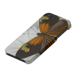 Sammamish Washington Photograph of Butterfly 50 iPhone SE/5/5s Case