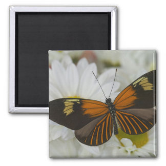 Sammamish Washington Photograph of Butterfly 50 Magnet