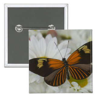 Sammamish Washington Photograph of Butterfly 50 Pinback Button