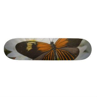 Sammamish Washington Photograph of Butterfly 50 Skateboard Deck